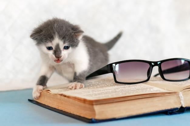 開いた本と眼鏡の近くの灰色の子猫。お気に入りの本を読む。
