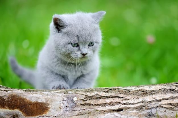 自然の灰色の子猫。木の上のかわいい子猫