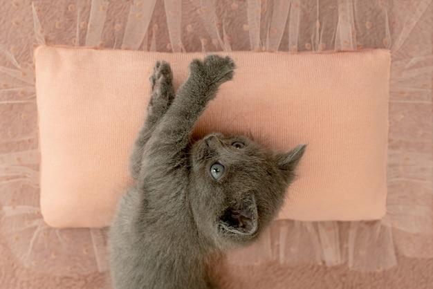 ピンクの枕に爪を持つ灰色の子猫