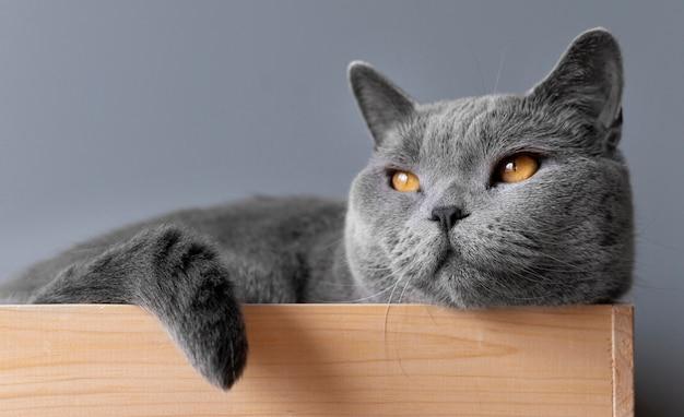 彼女の後ろにモノクロの壁を持つ灰色の子猫
