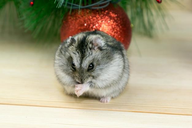 Gray mouse closeup