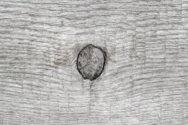 Gray natural wood background with knot. close-up macro view of wooden pattern, ancient timber texture.