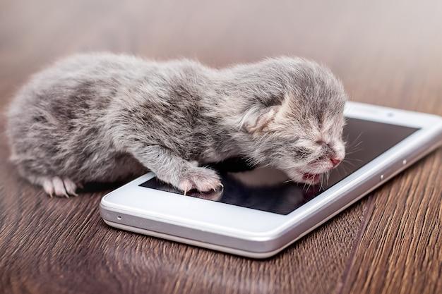 전화 근처 회색 신생아 새끼 고양이. 전화로 비즈니스 사례 관리. boss_에게 전화