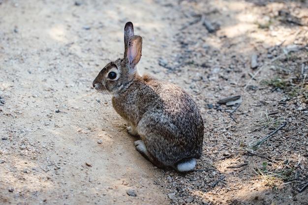 지상에 회색 토끼