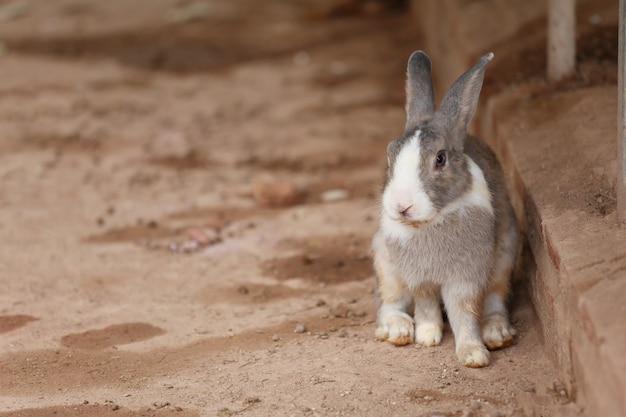 Серый кролик сидит на земле во дворе.