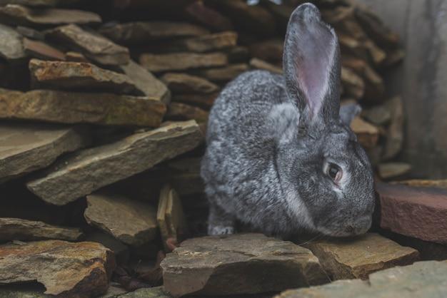 Coniglio grigio seduto su pietre