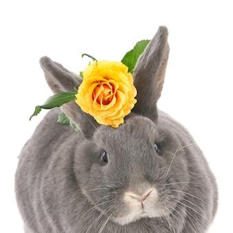 黄色いバラと灰色のウサギ。