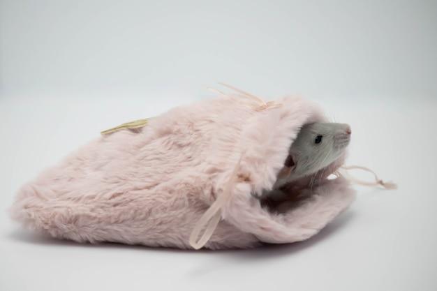 Серая крыса спрятана в розовой меховой сумке.