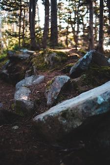 日中の森の灰色の岩