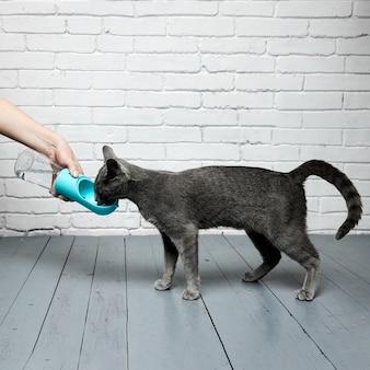 灰色のロシアンブルーの猫は、白いレンガの床に対して木製のラミネート床のボトルから水を飲みます...