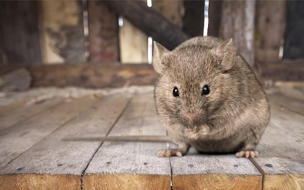 木製の背景に灰色の小さなかわいいマウス