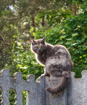 Gray spotted cat with yellow eyes sitting on a concrete fence