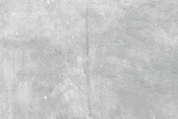 Gray star gooseberry leaf textured macro background