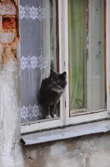 회색 길거리 고양이는 창턱에 앉는다. 고양이는 오래된 집의 창문에서 쉬고 있습니다.