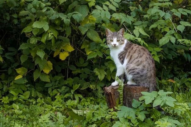 Серый полосатый полосатый кот снаружи с кустом осенних цветов