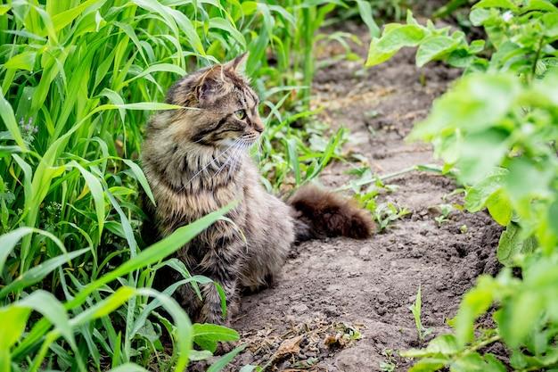 高い草の間の庭の灰色の縞模様の猫