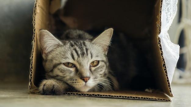 Gray striped cat lying in a box.