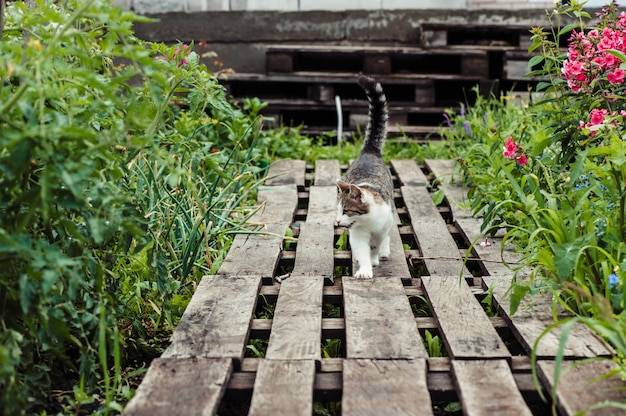 A gray striped cat walks along a path made of wooden pallets in the garden.