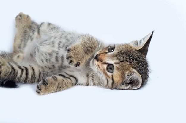 Серый полосатый котенок на белом