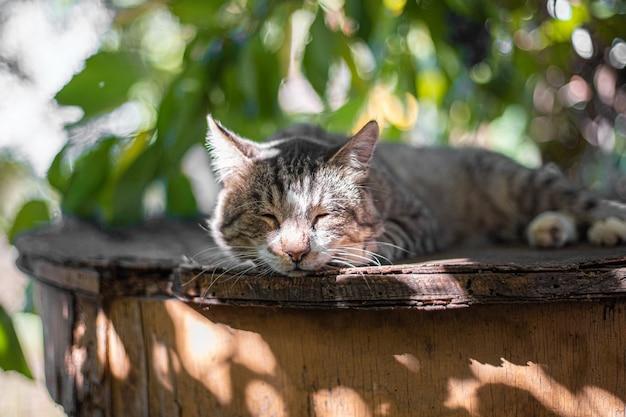 灰色のぶち猫は太陽の光線から隠れて、緑豊かな庭園の木製テーブルの上にあります。