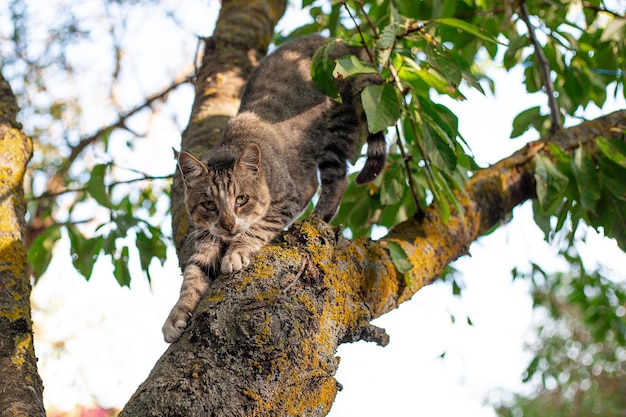 A gray tabby cat sits on a tree
