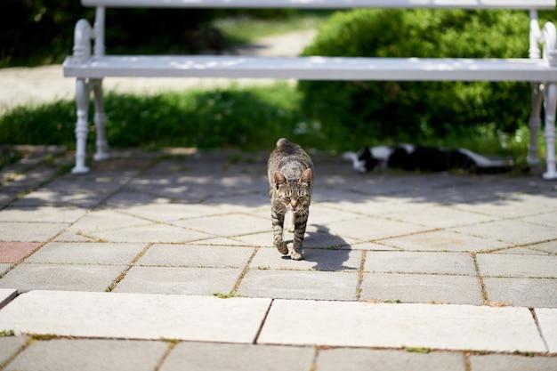 회색 얼룩 고양이는 녹색 공원에서 흰색 벤치의 배경에 타일 위를 걷는다.