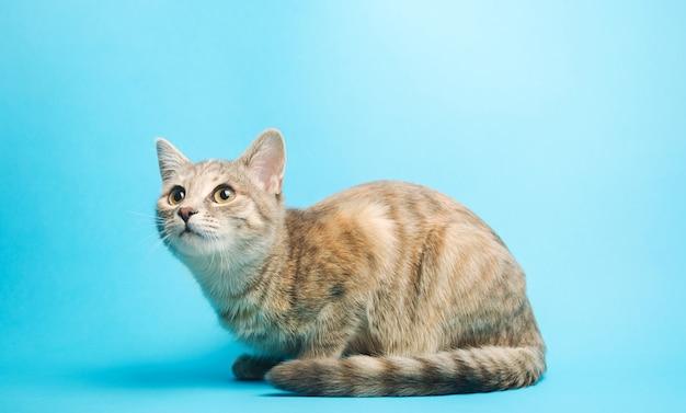 灰色のぶち猫