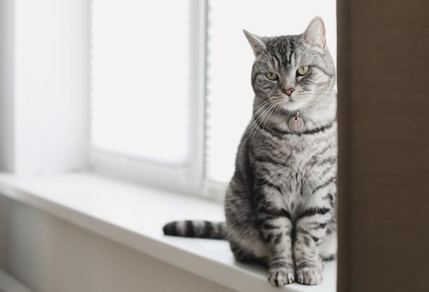 Серый полосатый забавный кот сидит на подоконнике дома