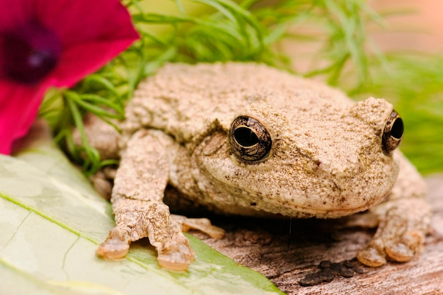 Gray tree frog with flower