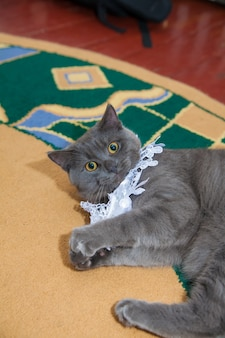 Gray wedding garter cat playing on the floor