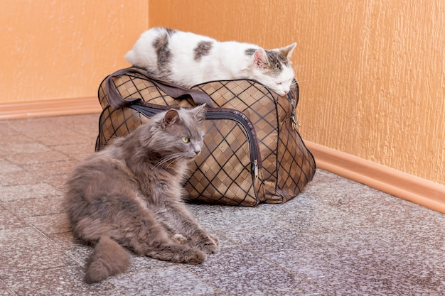 Gray and white cat with suitcase. waiting for the train at the train station. passengers with a suitcase while traveling