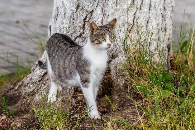 厚い木の近くに猫の白い斑点のある灰色
