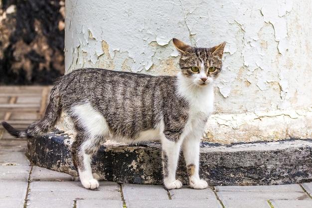 家の列に猫の白いパッチと灰色