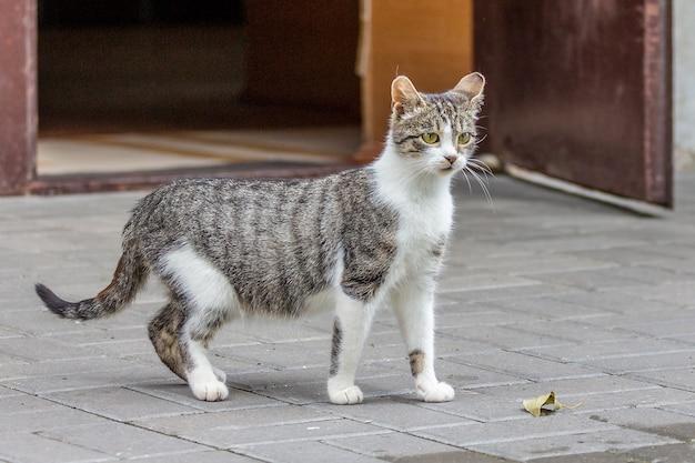 家の開いたドアの近くに猫の白いパッチと灰色
