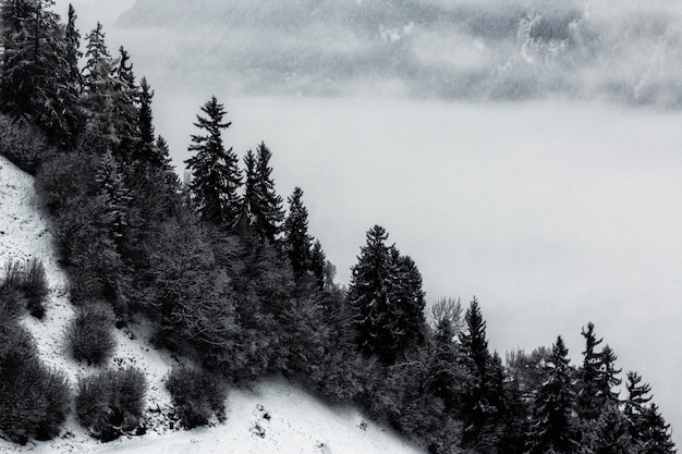 Grayscale   of pine trees and mountain