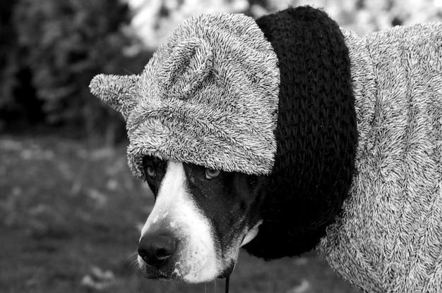 Снимок с выборочным фокусом в оттенках серого: собака, одетая в серый зимний свитер