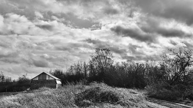 Scatto in scala di grigi di alberi audaci nella campagna