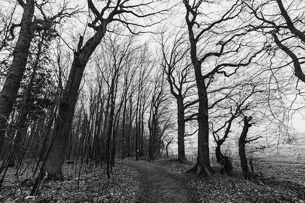 Grayscale shot of a creepy forest