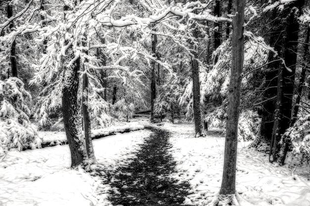 雪に覆われた森の真ん中にある経路のグレースケールショット