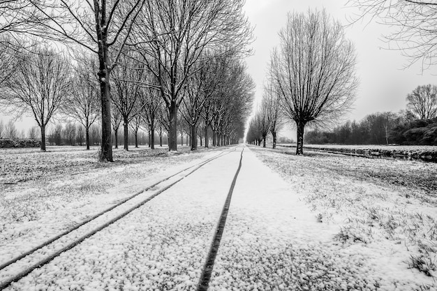 Grayscale shot of pathway in the middle of leafless trees covered in snow in the winter