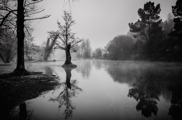 Grayscale shot of a pond rounded by trees in galicia