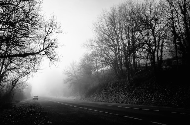 Grayscale shot of a road in the middle of leafless trees with fog