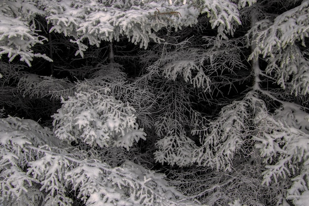 Grayscale shot of trees covered in snow in the winter
