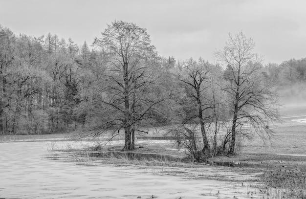 Alberi in scala di grigi vicino al corpo idrico