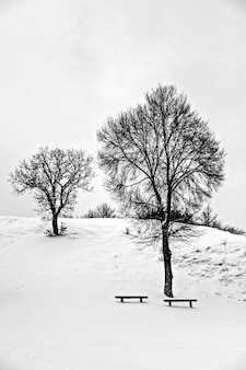 Grayscale of trees and two benches