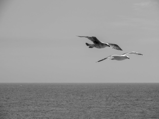 Grayscale of two booby birds flying on the sea