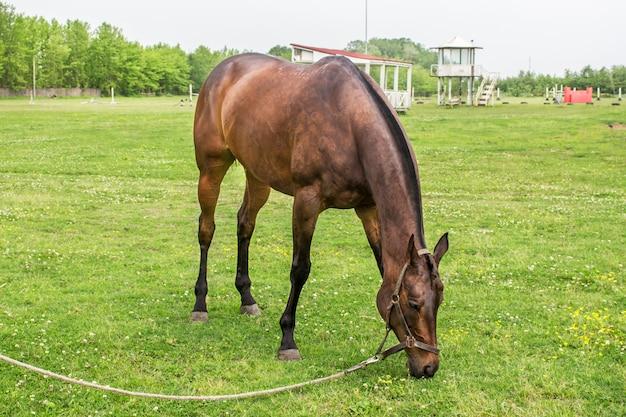 Выпас коричневого коня на ферме ранчо
