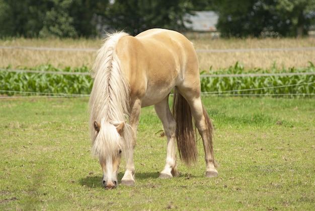Выпас лошади в поле