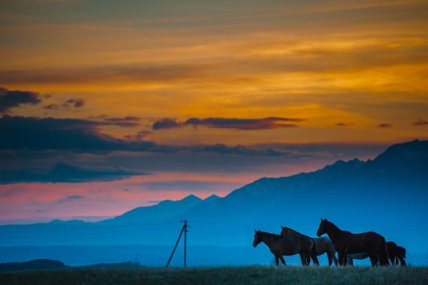 朝の夕方、山頂の斜面で野生の馬を放牧します。