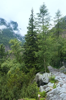 The great cold valley summer cloudy view. high tatras, slovakia.